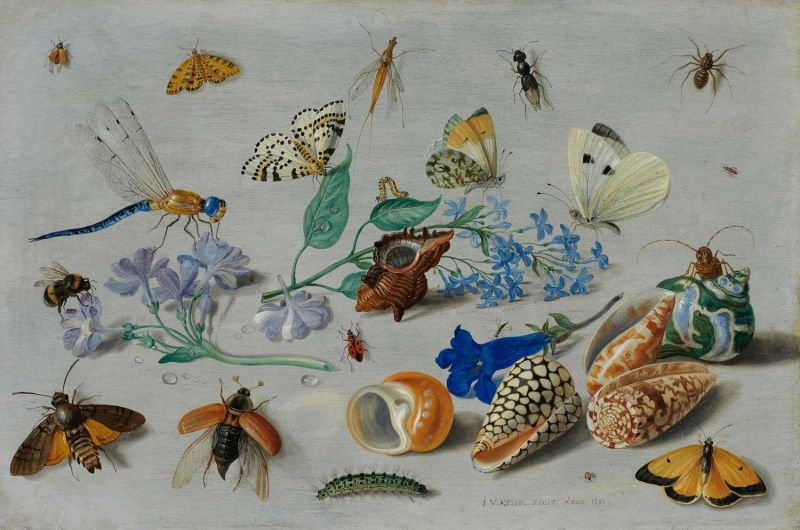 Featured image for the project: Butterflies and other insects