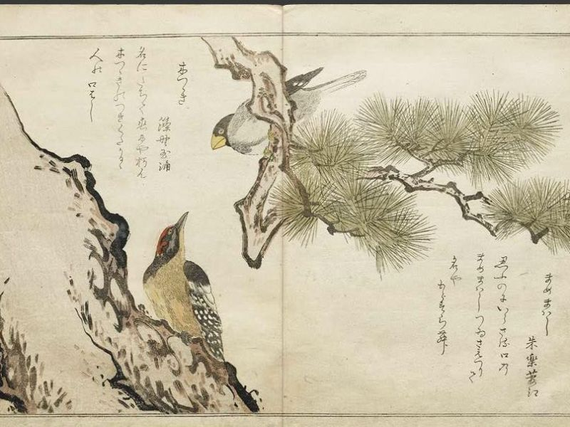 Highlight image for Idea Starter 5 - Kitagawa Utamaro Picture Books Inspired by Nature