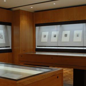 Gallery 14 - The Shiba