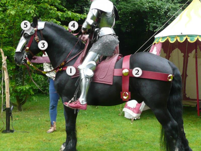 Arming a Horse