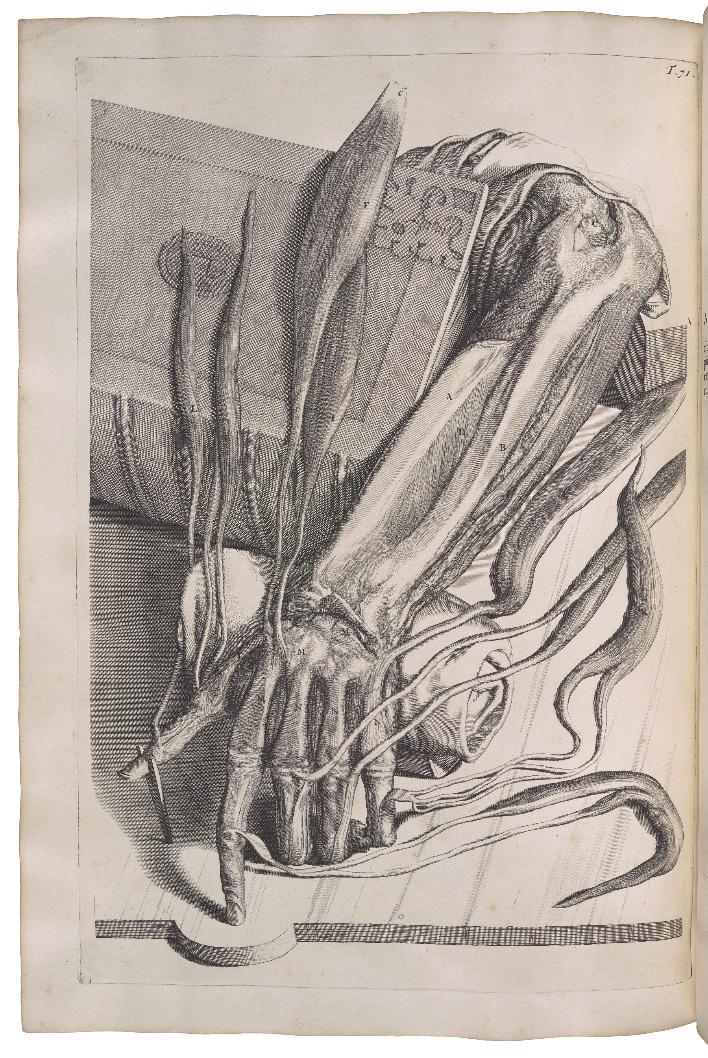 Engraving of dissected hand: The Syndics of Cambridge University Library
